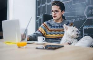 pet-friendly-office